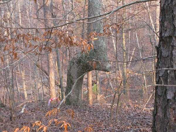 Indian Trail Trees